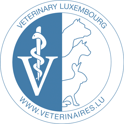 Logo Carré Steeve (Dr)