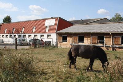 poney kayl