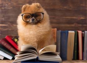 Avoir un chien au Luxembourg : quelles formalités ?