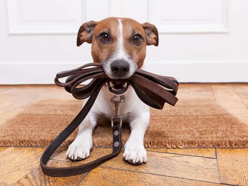 Sollten Sie sich für Ihr Haustier versichern lassen?