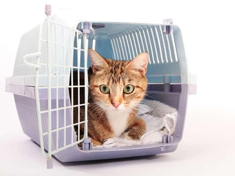 Emmener son chat chez le vétérinaire