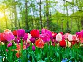 Garten im Mai: Beratung und zu erledigende Arbeit
