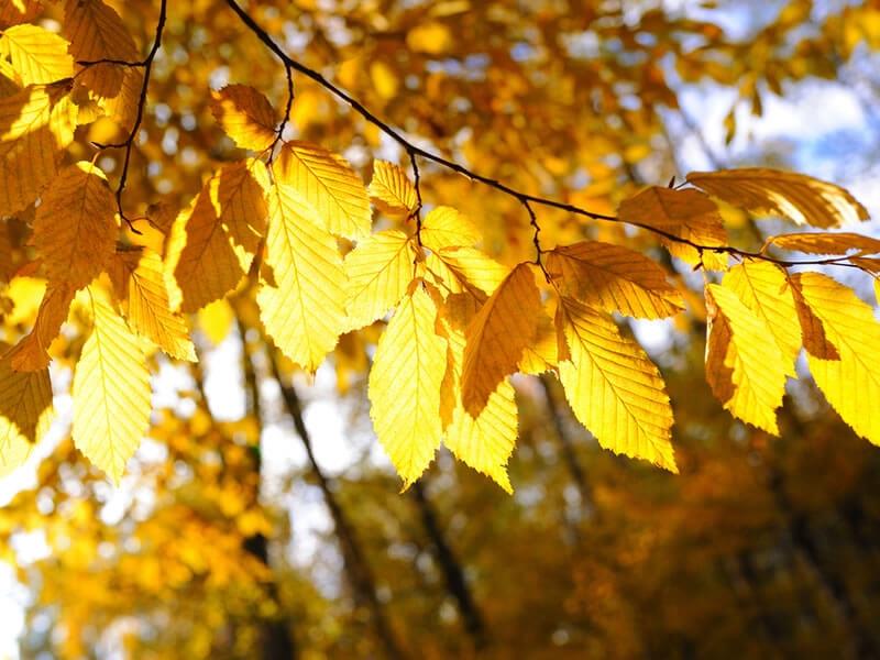 Jardin en octobre : conseils et travaux à réaliser