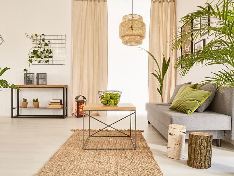 Mit welchen Pflanzen schmücken Sie Ihr Zuhause? : Editus