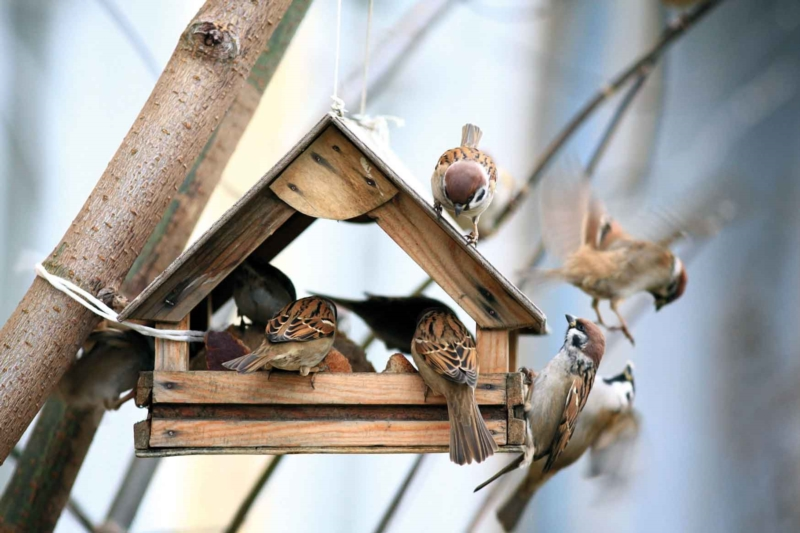 Good actions to adopt for your garden in winter