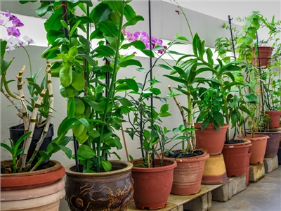 Végétaliser un appartement