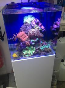 Aquarium 91 Litres